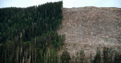A környezetpusztítás felelős a világjárványért