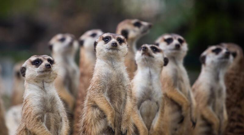 Online tartalmakkal várja az érdeklődőket a Fővárosi Állat