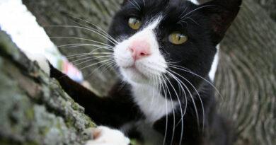 Fegyveres rajtaütéssel próbálta visszaszerezni macskáját egy ausztrál férfi