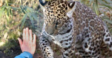 Állatkertek és vadasparkok kinyitását kérik Orbántól