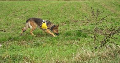 Lengyelországban bevezethetik a leszerelt rendőrlovak és -kutyák nyugellátását
